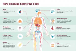 how-smoking-harms